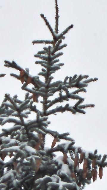360x640-pine-peak