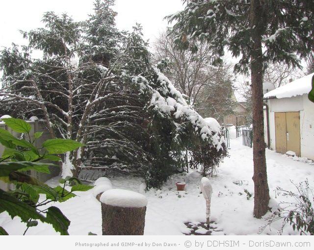 Our snowed garden.