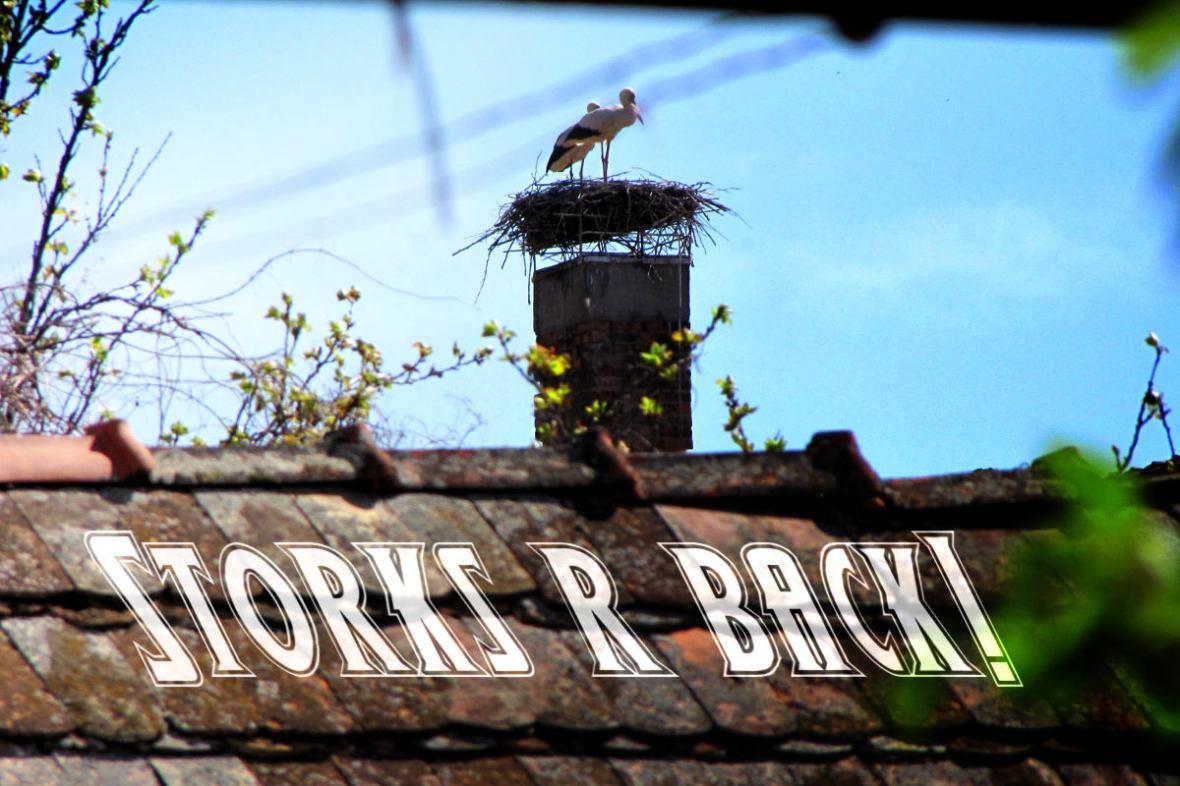 Storks are back!
