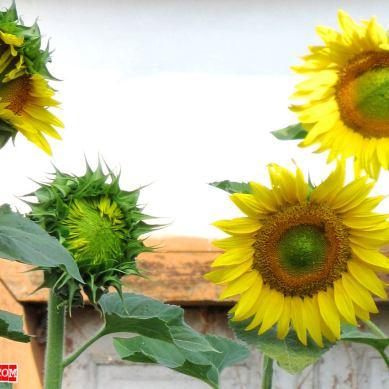 1280x852-wallpaper-goodmorning-sunshine01