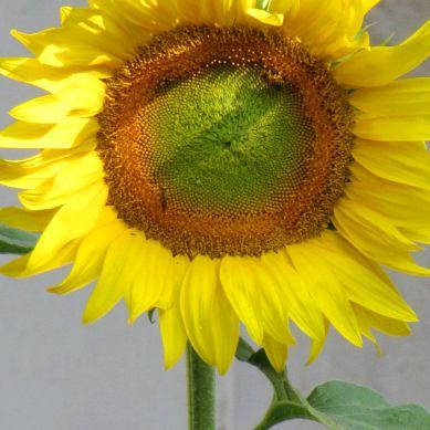 1280x852-wallpaper-goodmorning-sunshine02