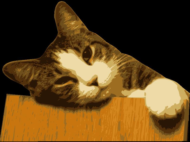 gato-1-cut-800px