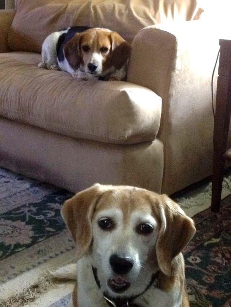 Belle & Buddy.